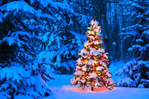 christmas in jasper