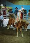 jasper heritage rodeo